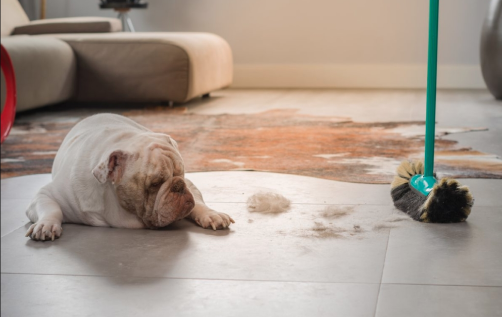clean dog hair in your home