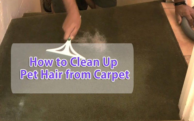 clean dog hair from carpet